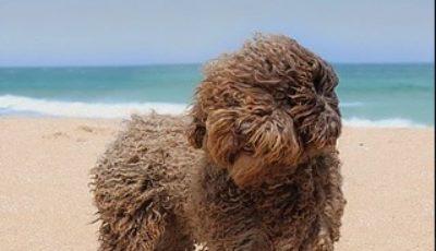 feria del perro malaga