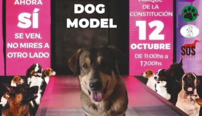 TERCERA PASARELA DOG MODEL MARBELLA